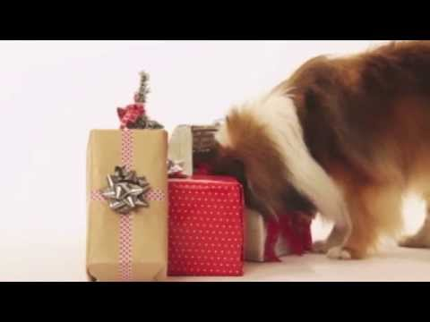 Christmas and Winter Care for Pets