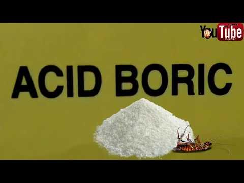 Boric Acid The Best Natural Cockroach Killer