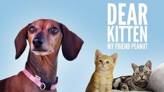 Dear Kitten: My Friend Peanut