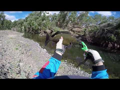 Bowen River Sooties