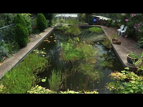 Building a Natural Pond from a Swimming Pool  - Ep 4