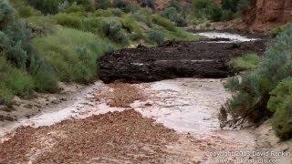 Large Flash Flood / Debris Flow Buckskin Wash / Gulch 2013