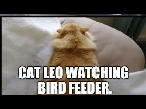 Cat TV Showing Birds Feeding On Make DIY Type 2 Cheap & Easy Small Birds Feeder PVC Pipe & Wood Top