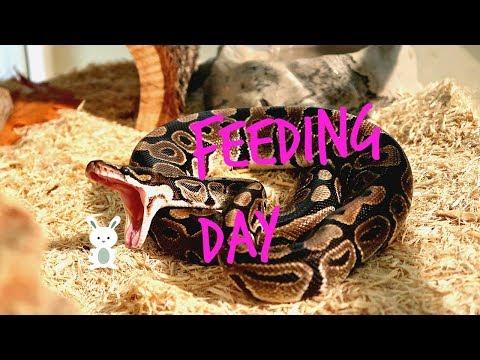 Feeding some of my animals