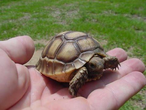 Baby Tortoise Making! Kamp Kenan S1 Episode 4