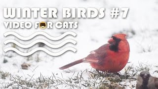VIDEO FOR CATS TO WATCH: Winter Birds #7 - N.Cardinal, Sparrows, Finches.