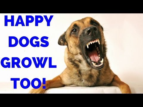 Dogs Growl When They Are Happy Too - Why A Growling Dog Is Good