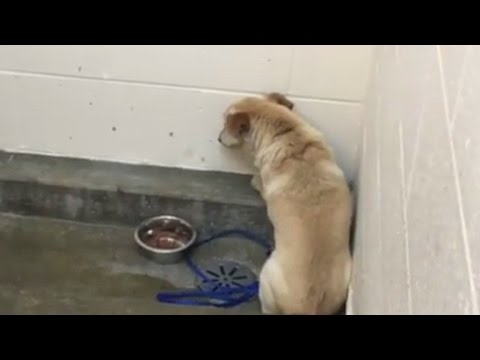 Depressed Dog Stares At Wall For Weeks After Being Abandoned By Owners