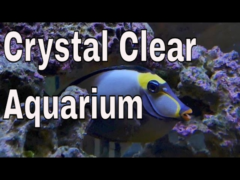 crystal clear saltwater aquarium water - rotter tube