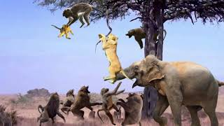 Lion Climb A Tree To Catch Baboon To Save Baby - Elephant Save Baby From Lion, Hippo vs Lion