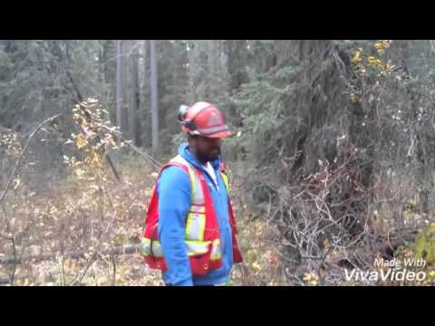 How to make College life fun....College assignment bloopers....NAIT Forest Technology