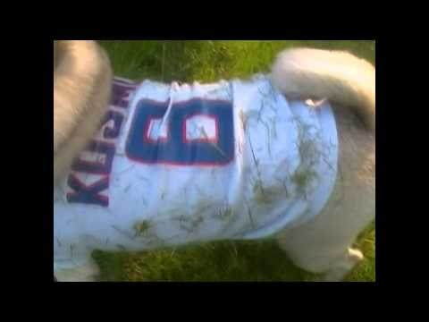 Dog Clothes Test #35: Durability (Funny & Cute!)