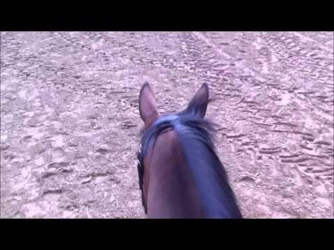 120719 riding, headshaking, horse