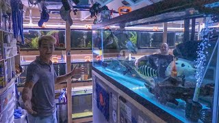 ULTIMATE BASEMENT FISH COLLECTION!!!