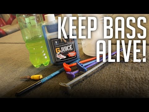 I'M BACK! || How To Keep Bass ALIVE In The Heat Of Summer! (Fish Care 101)