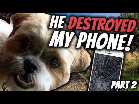 VLOG   He DESTROYED My Phone - Part 2   Real Australian English Conversations   Life in Australia