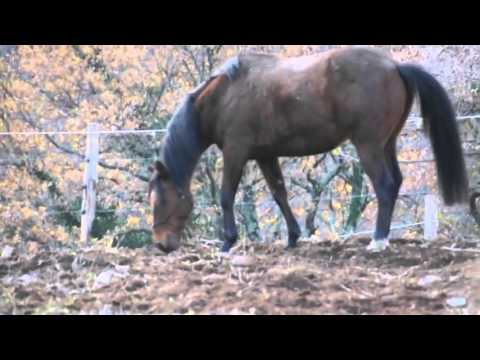 Horse mating Female Horses Donkeys trying to mate like humans Funny