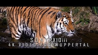 SONY RX10 III - My first 4K Videotest / Zoo Wuppertal mit Frank SiriuS