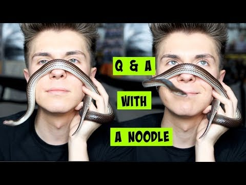 Q&A w/ My HOLO Snake (noodle) | WHATS MY FAVORITE PET