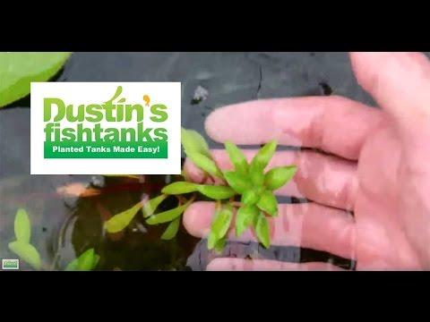 How to: Maintenance in Garden pond; greenhouse tank update, algae in top pond
