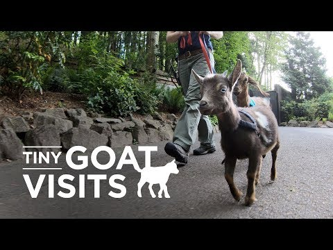 Welcome to Tiny Goat Visits 🐐