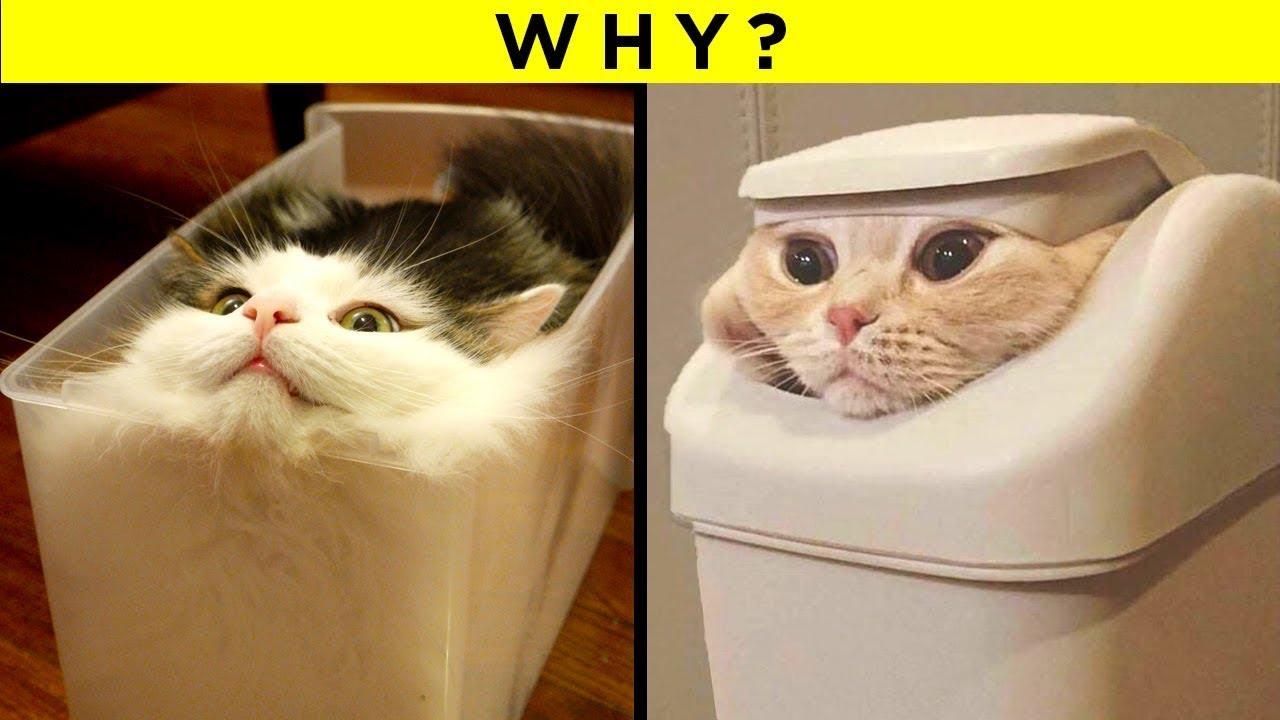 Strangest Cat Behaviours Finally Explained