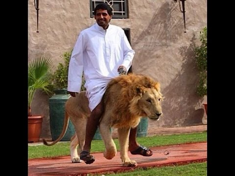 UAE outlaws keeping wild animals as pets