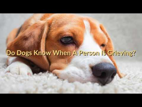 Do Dogs Know When A Person Is Grieving?