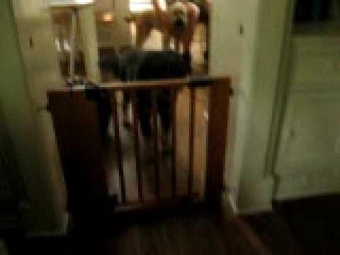 Jasper Jumps The Baby Gate