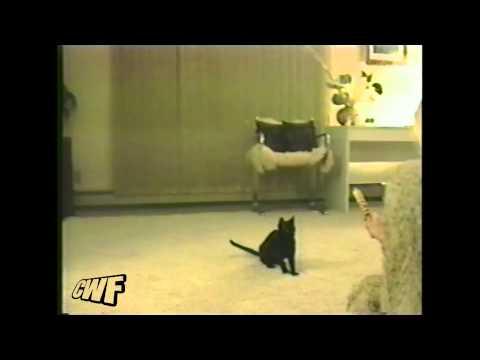 CuteWinFail: Cat backflip win