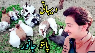 😍Dehat K Palto Janwar 🐒گاوں کے گھریلو اور پیارے جانور 🦊 #VeLLa_MunDa Vlog 🏕 Village life