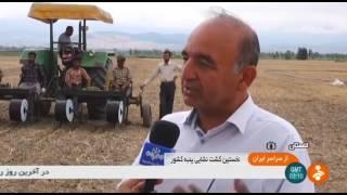 Iran Cotton Paddy cultivation, Golestan province كاشت جوانه پنبه استان گلستان ايران