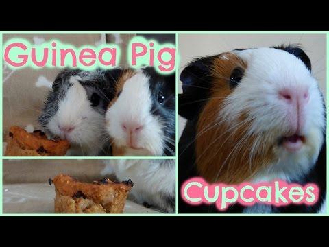 DIY Guinea Pig Treats: Cupcakes