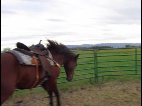 Wild Gaited Mustang Bucking Horse Training