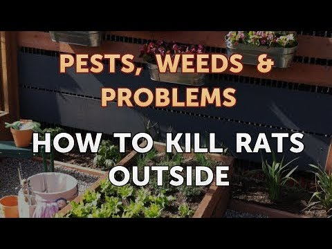 How to Kill Rats Outside