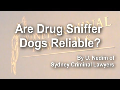 Are Drug Sniffer Dogs Reliable?