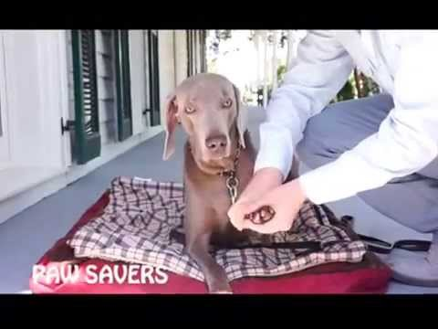 PAW SAVERS Disposable Paw Pads INSTRUCTIONAL VIDEO
