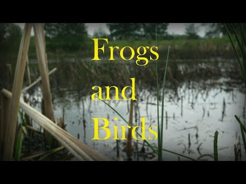 Frogs Croaking and Birds Singing in (ASMR) Paradise ;)