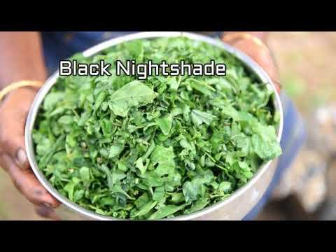 Black Nighshade Stir Fry | A Magical Herb