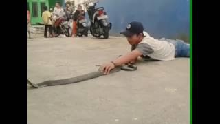 Download King cobra freehandle #Ekaprasetya Video