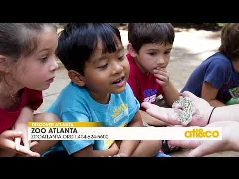 Summer events at Zoo Atlanta