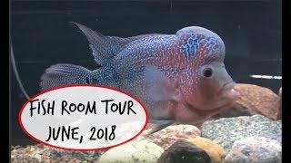 Fish Room Tour   June, 2018 #fishfam #cichlid #fishroom