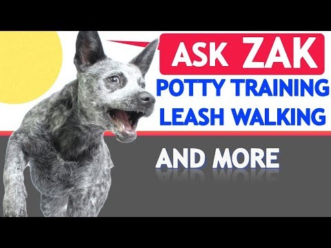 Dog Training Tips: Potty Training, Leash Walking, When to Start Training and Fetch!