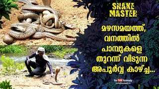 Wow! Vava Suresh releases dangerous snakes in the forest | Snakemaster EP 486 | Kaumudy TV