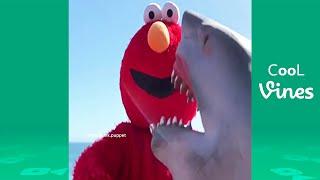Shark Puppet Beyond Vine - Funny Shark Puppet Instagram Videos 2019
