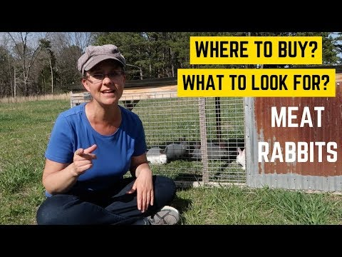 Where to Buy Meat Rabbits Breeders & What to Look For!!!