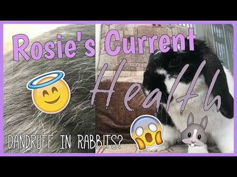 ROSIE'S CURRENT HEALTH: Dandruff In Rabbits? | RosieBunneh