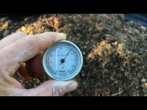Horse manure windrow and hot compost update 10th May 2017