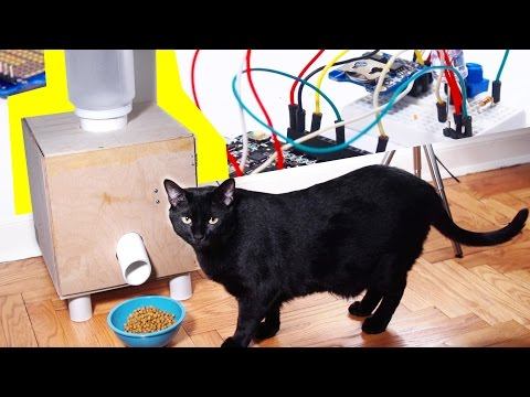 HOW TO: Automatic Cat Feeder! DIY Tutorial