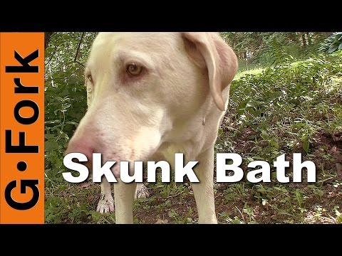 Remove Skunk Smell On Your Dog - GardenFork